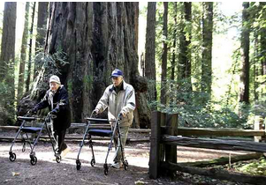 Altagracia and Hector Aizpuru, of Scotts Valley enjoy their daily walk along the Redwood Grove Loop Trail at Henry Cowell Redwoods State Park. (Shmuel Thaler -- Santa Cruz Sentinel file)