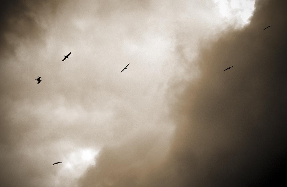 6 Gulls.jpg