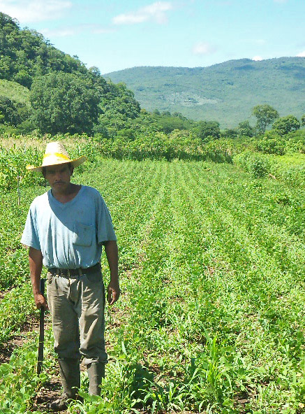Farmer in crop fields in Siquatepeque, Honduras