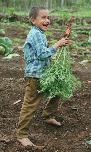 Farmer's son in garden boasting freshly harvested carrots