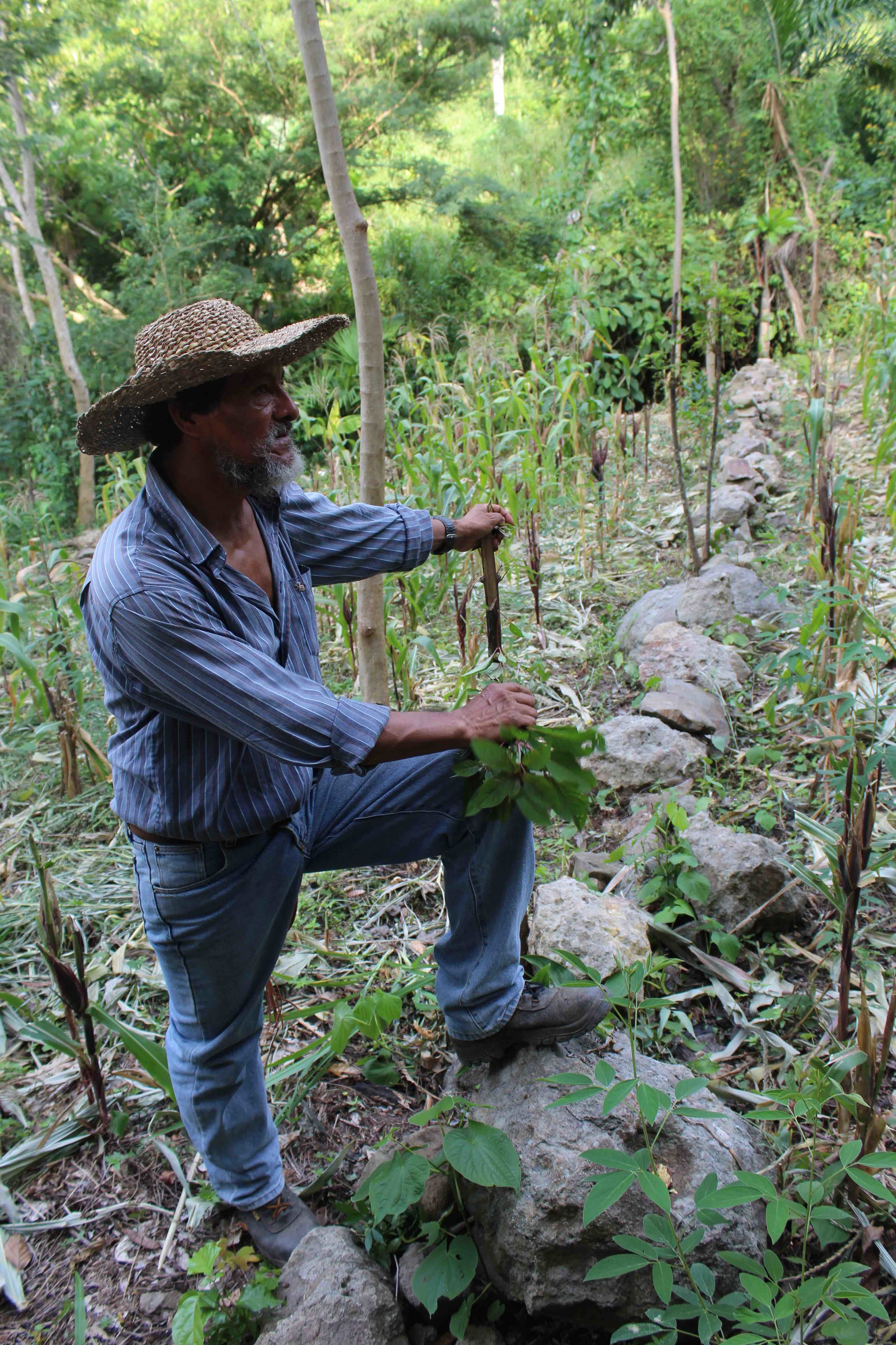 Joaquín stands along the contour lines he built on his farm with the help of Field Trainer, Mariano Navarro - photo by Bailey McWilliams