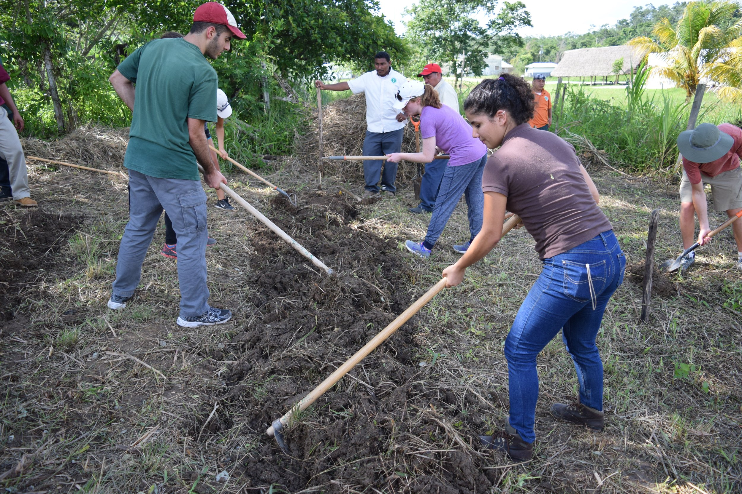 NEU students working with guidance of Belize field trainers.
