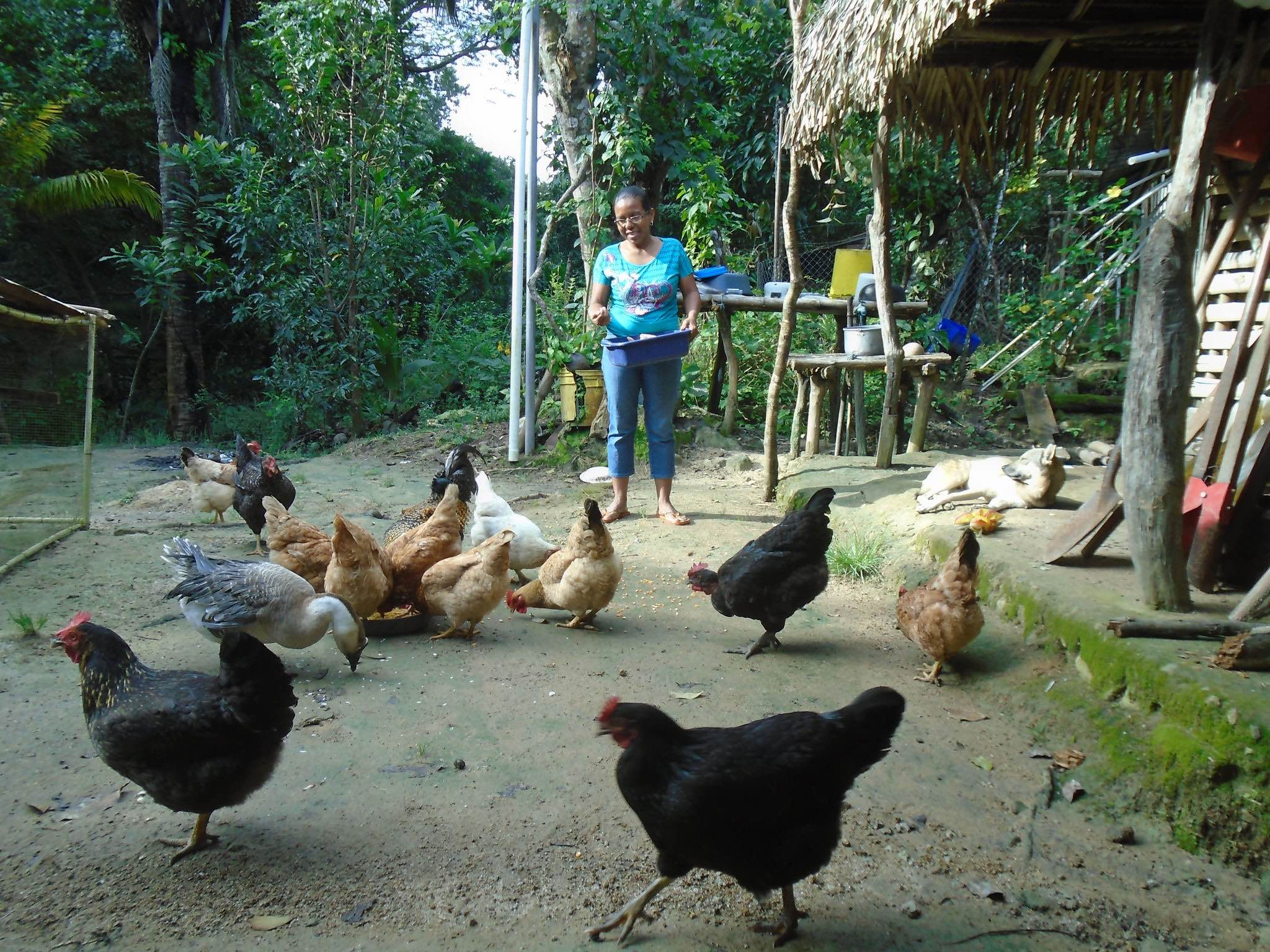 Nancy has taken out loans to expand her chicken livestock business.- photo by Dayra Julio