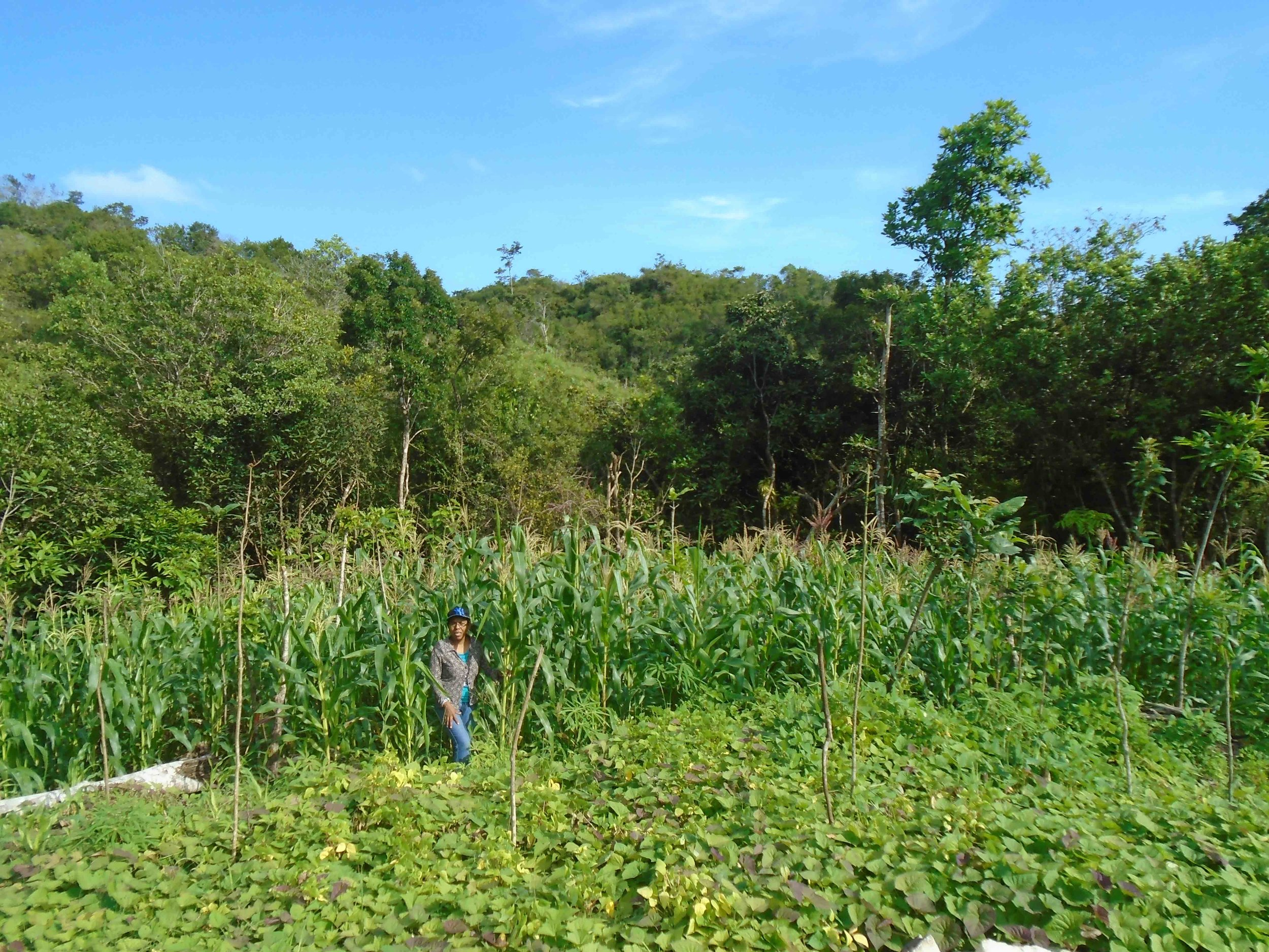 Nancy stands in a field of organically-grown corn and yams. - photo by Dayra Julio