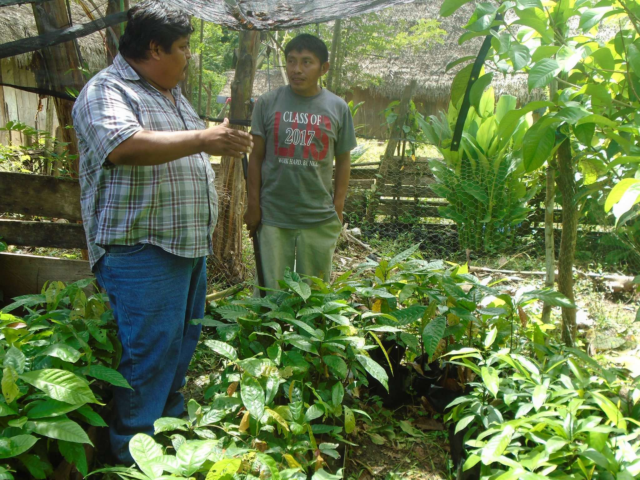Julian Putul and his wife, Ofelia Ana Cucul, show their nutmeg and cacao nursery to Leonardo on a recent visit to the village of San Benito Poite – Photo by Candido Chun