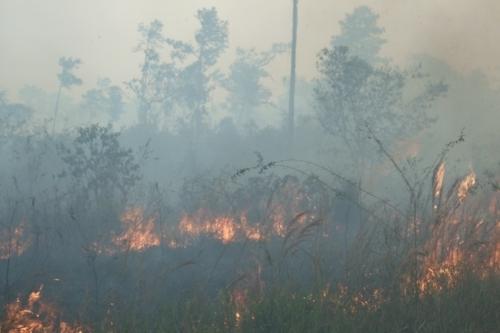 Slash and burn farming and total environmental devastation