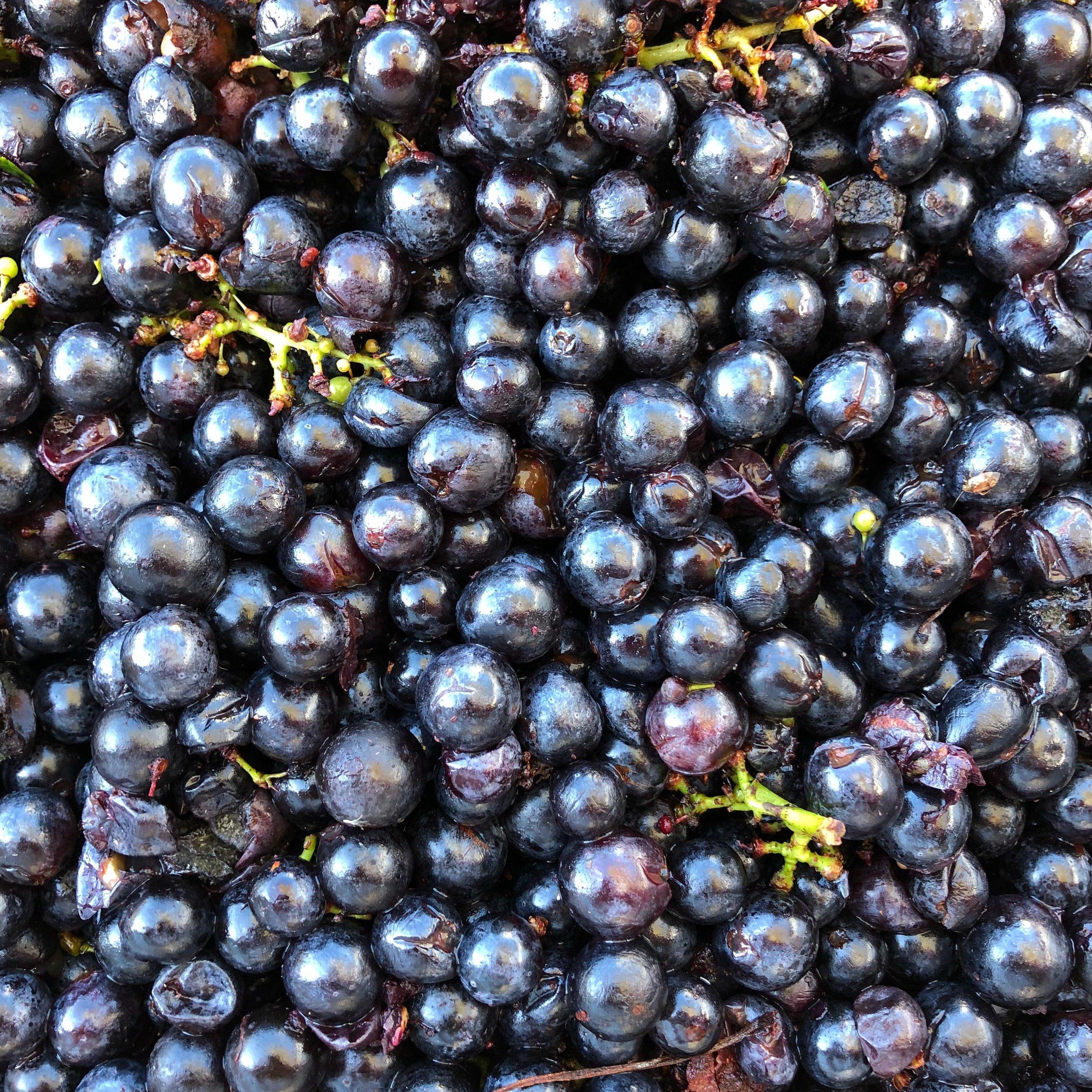 grape close up.jpg