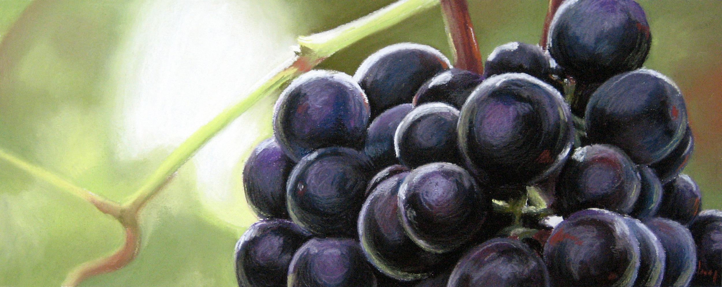 Purple Grapes, 2007