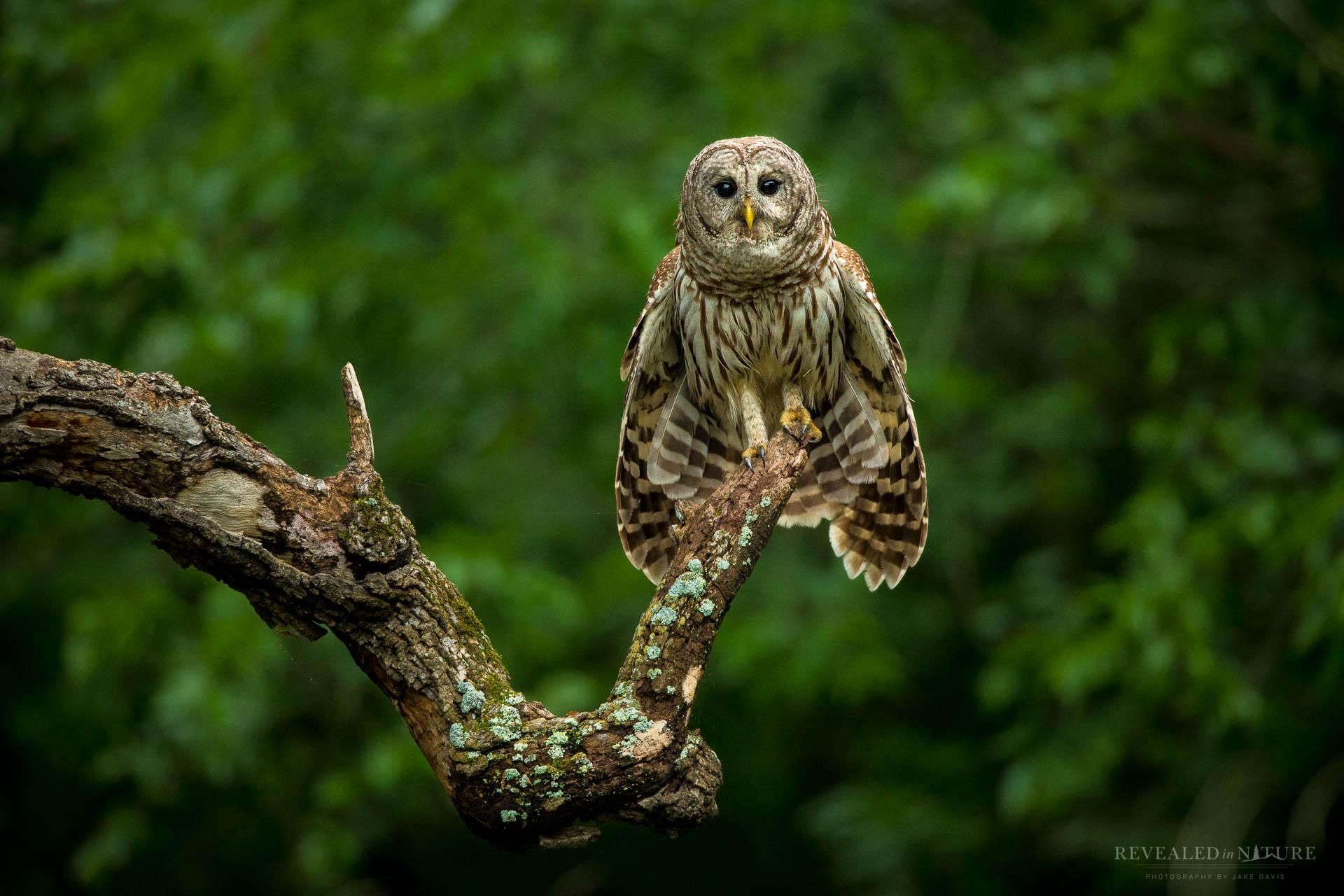 Texas Bird Photography