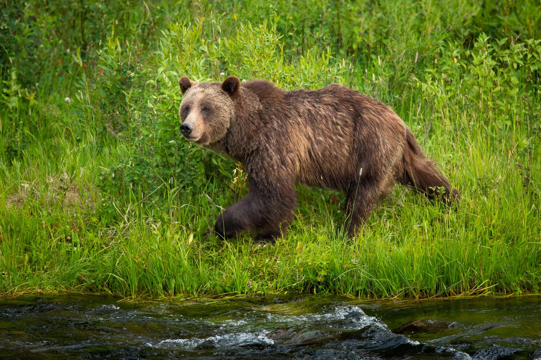 Bears-8.jpg