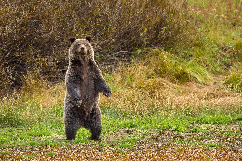 Bears-10.jpg