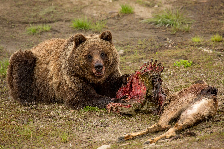 Bears-13.jpg