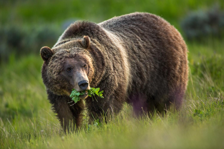Bears-17.jpg