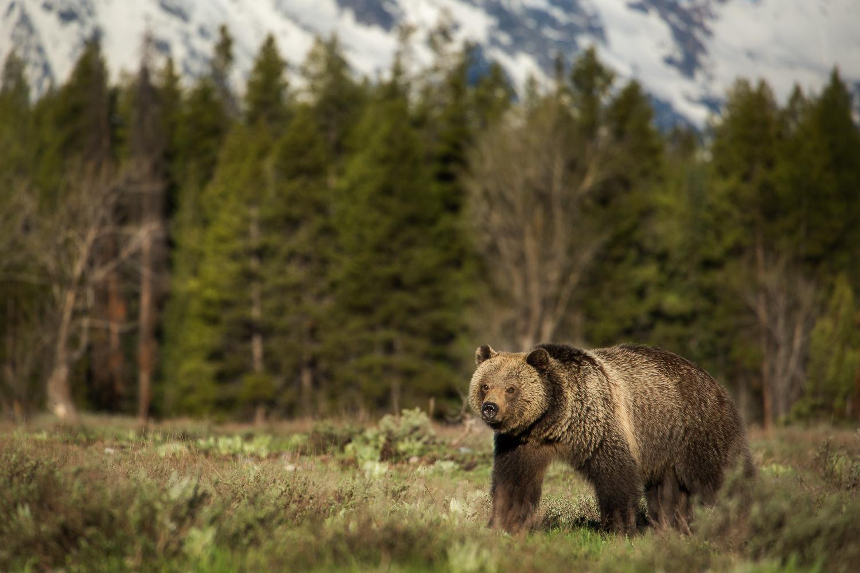 Bears-18.jpg