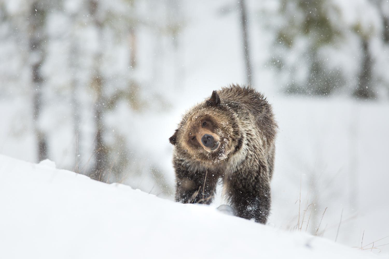 Bears-24.jpg