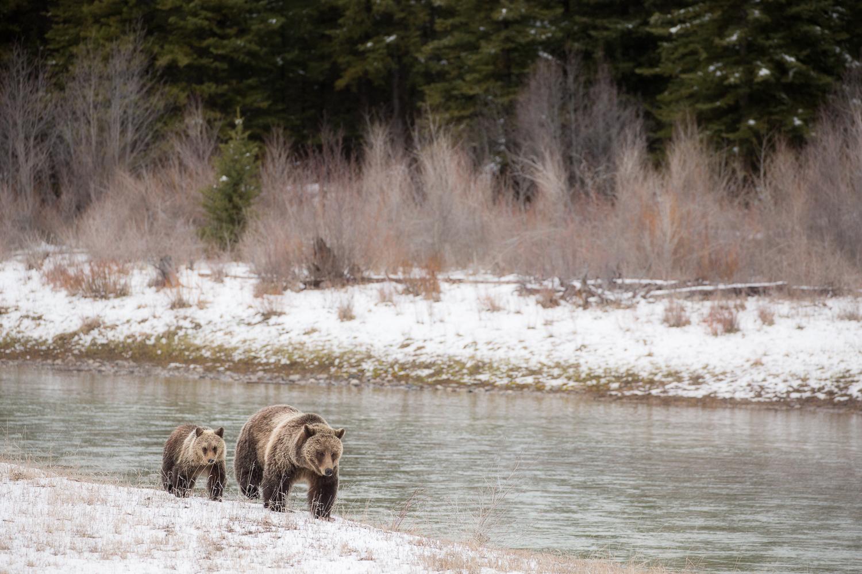 Bears-26.jpg