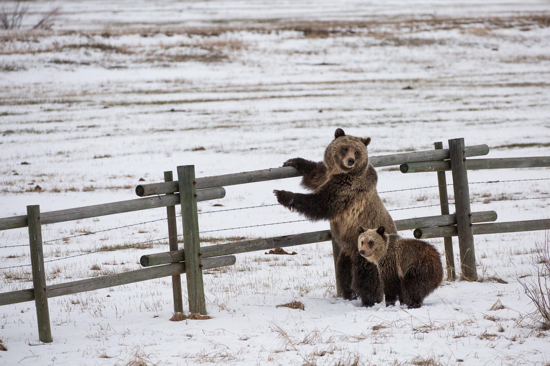 Bears-28.jpg