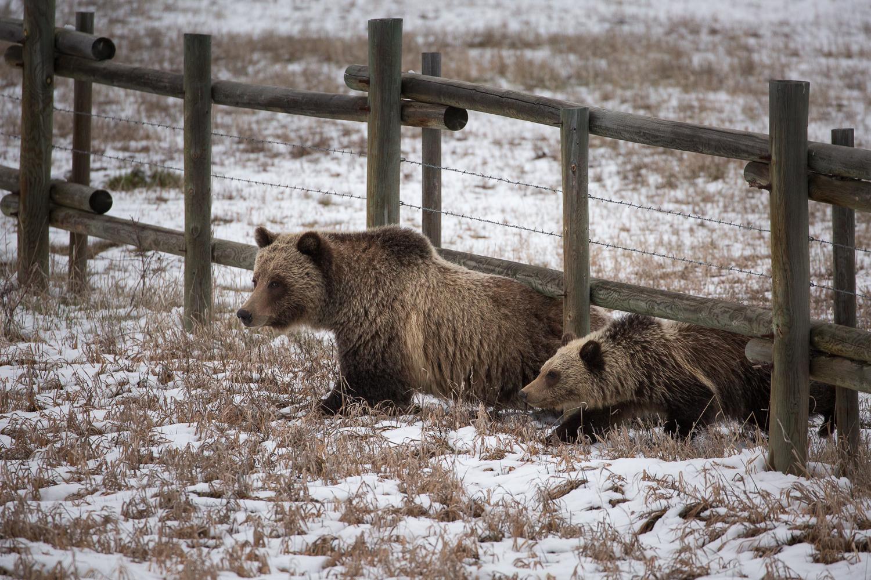 Bears-27.jpg