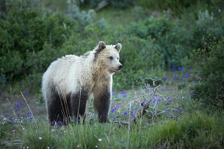 Bears-31.jpg
