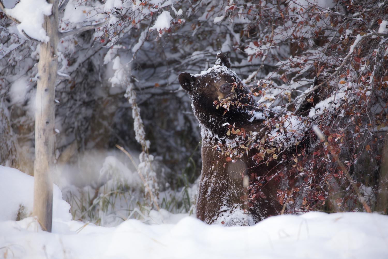 Bears-32.jpg
