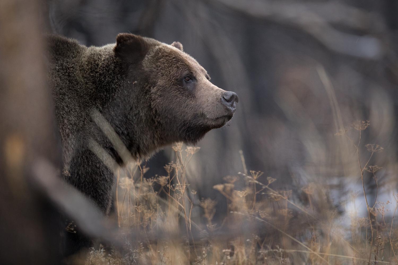 Bears-34.jpg