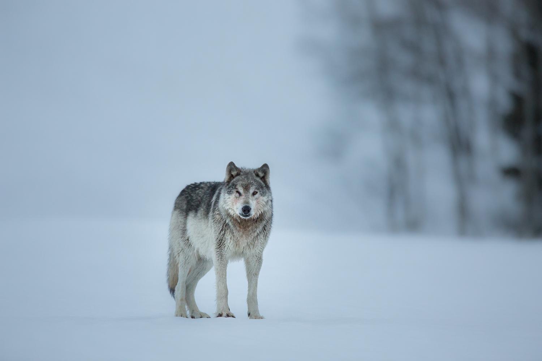 Wildlife-19.jpg