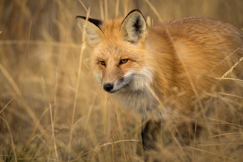 Wildlife-21.jpg