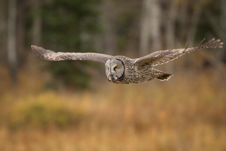 Wildlife-27.jpg