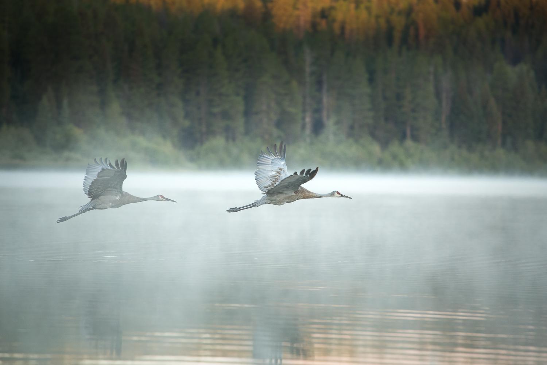 Wildlife-34.jpg
