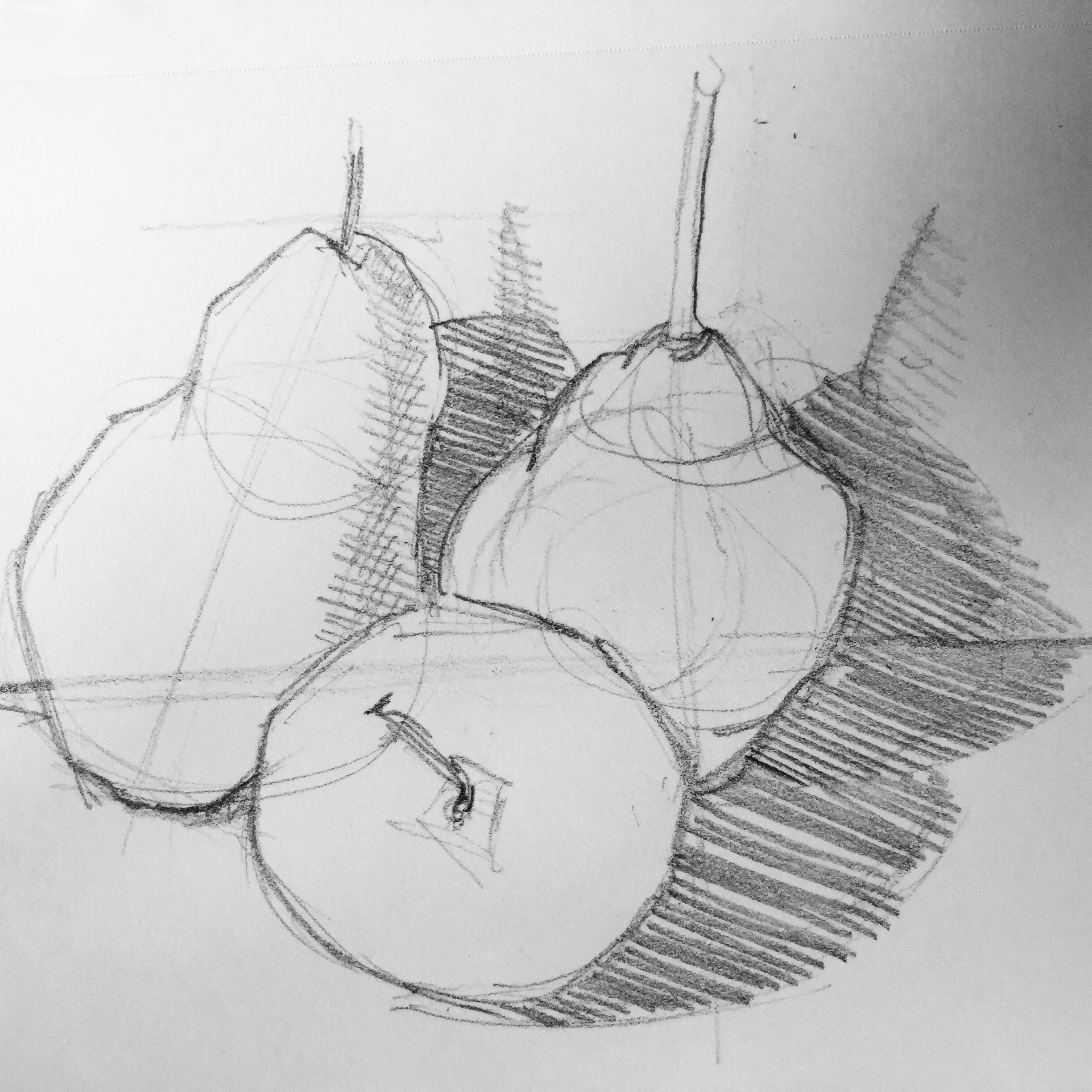 Study of Pears  by Maria Rizzo