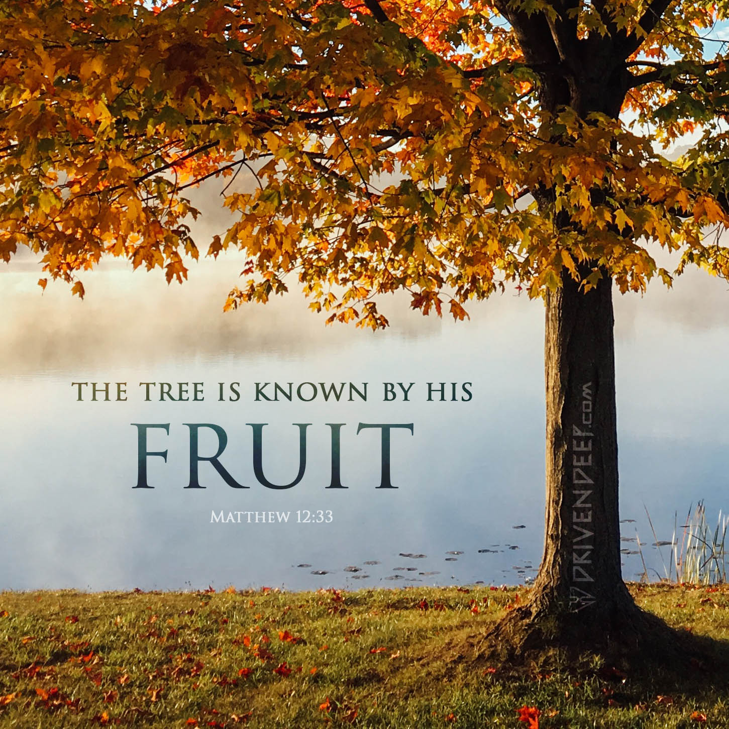 The tree is known by his fruit - Small.jpg