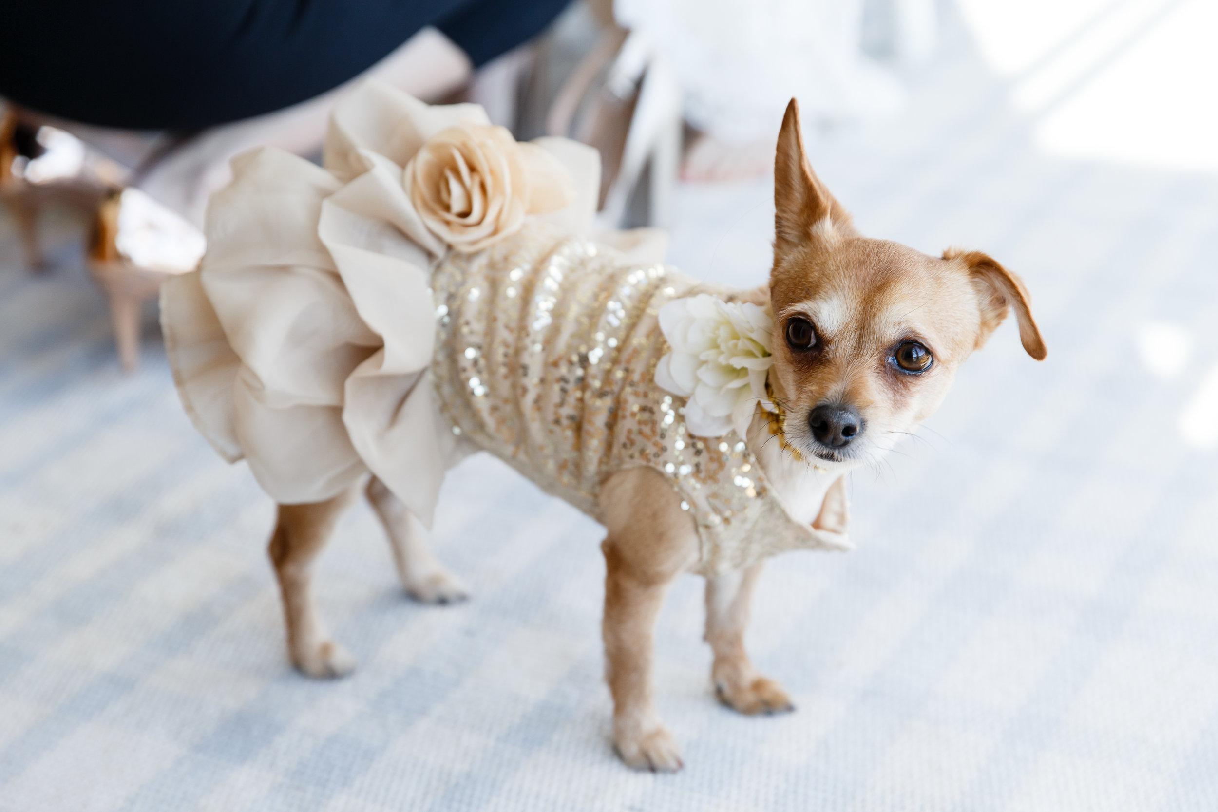 CM Wedding_0064.JPG