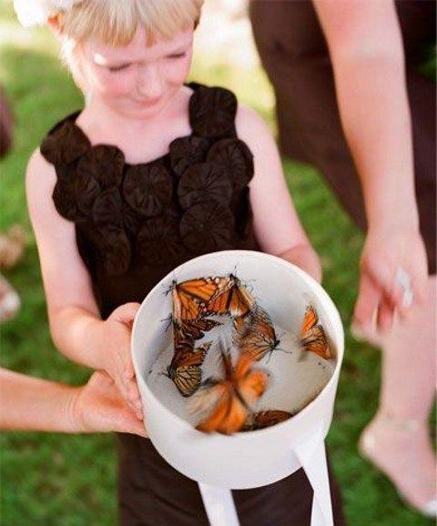 Butterfly-2.jpg