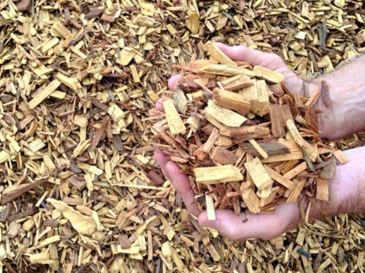 cypress garden chip