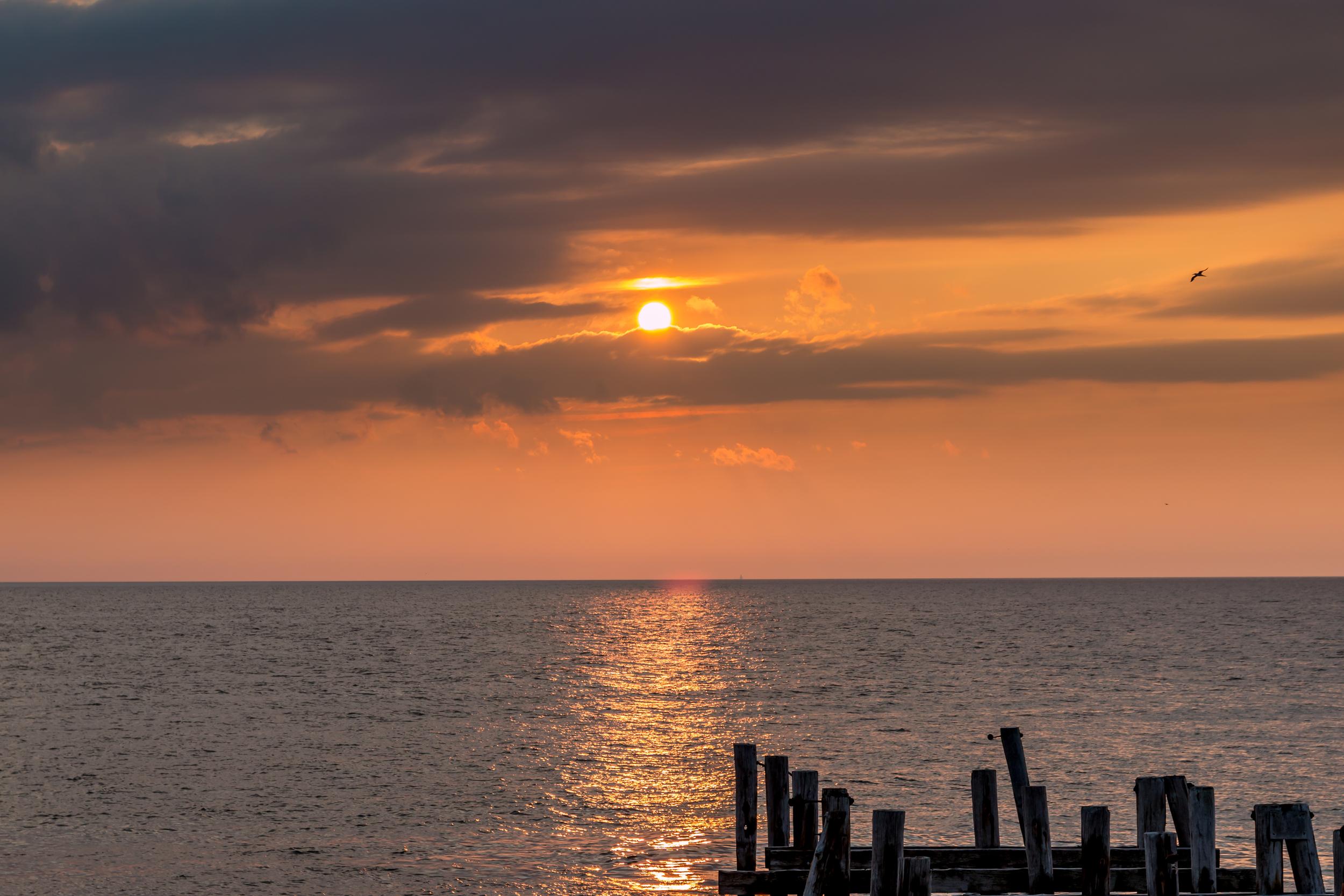 Gull at Sunset Beach NJ-1.jpg