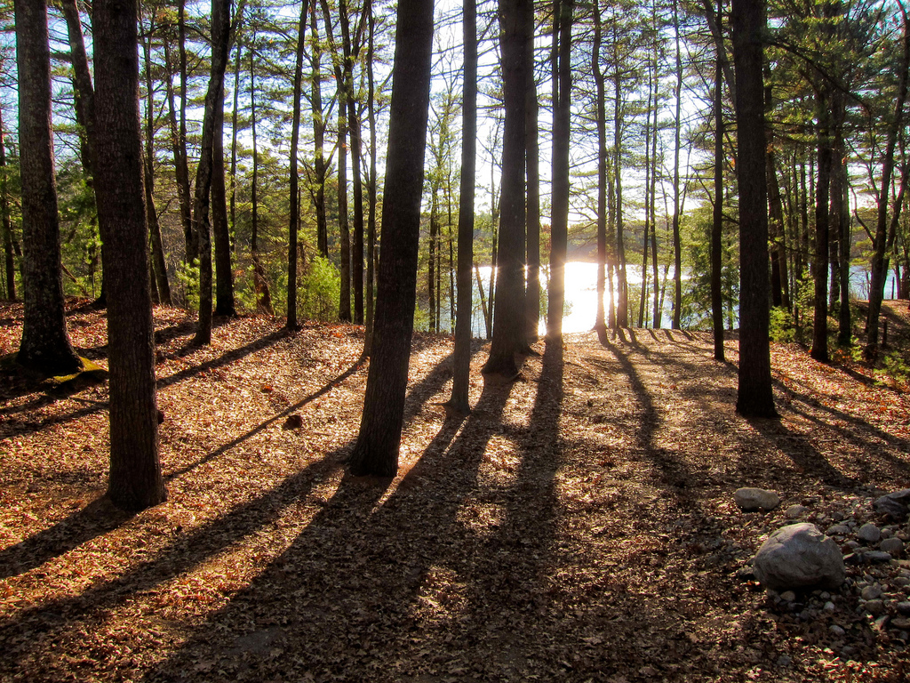 The woods by Walden Pond