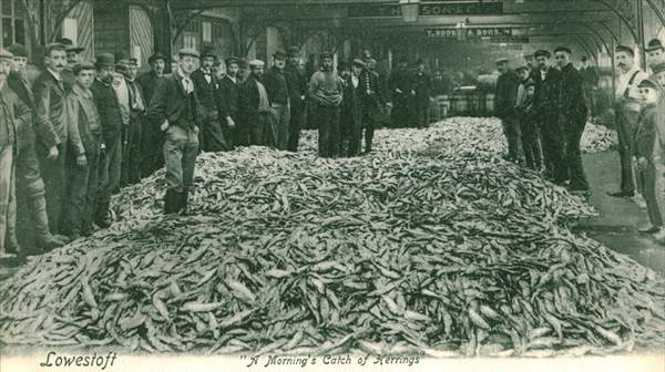 Sebald's herring in Lowestoft photograph.