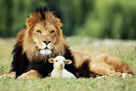 lion-and-the-lamb.jpg