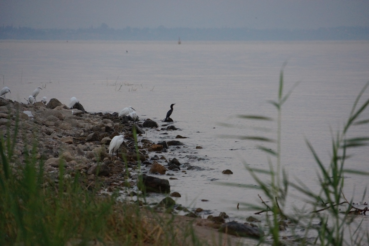 Birds upon the Sea of Galilee