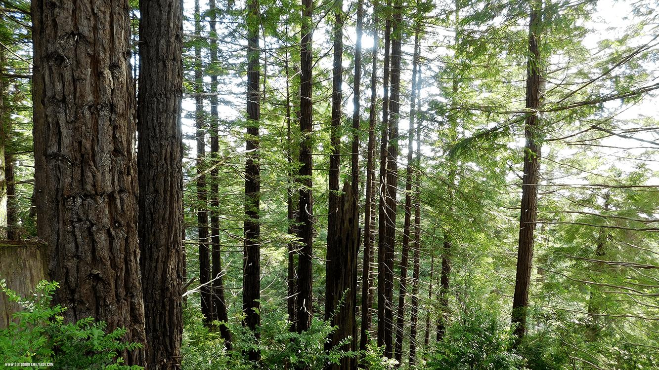 trees-pana-sm.png