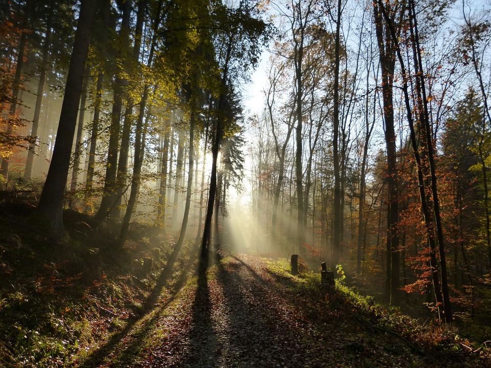 forest-68605_960_720.jpg