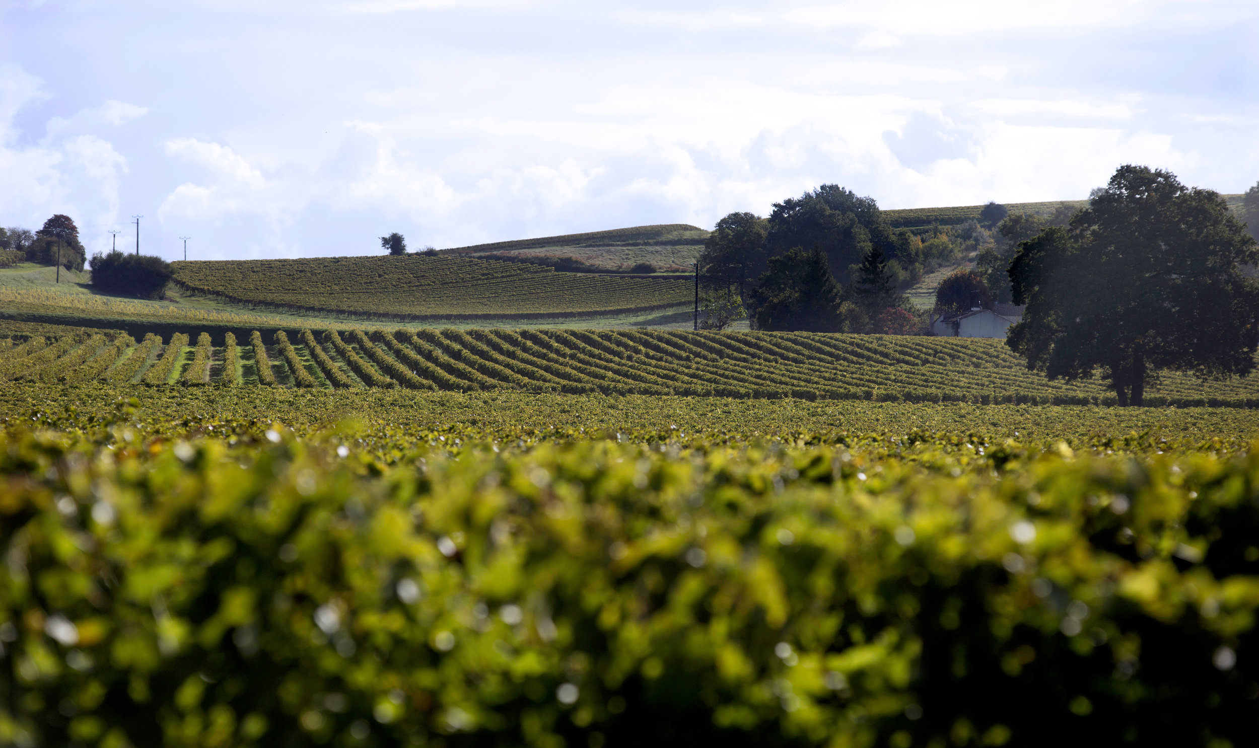 Vineyards&Landscapes _0611.jpg