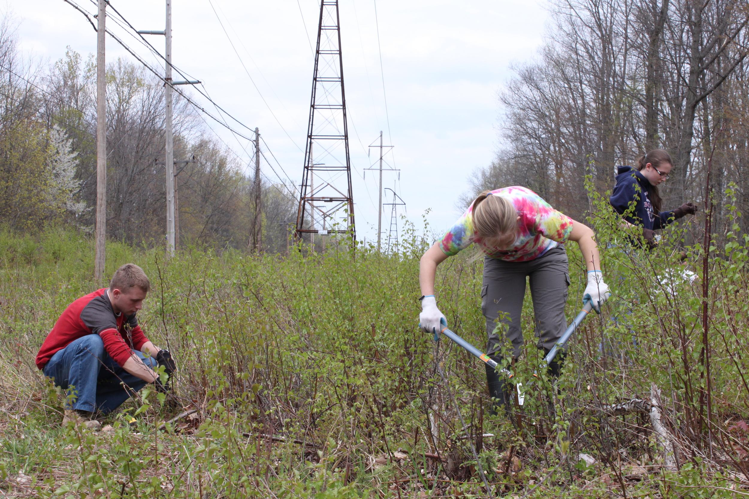 Invasive plant removal
