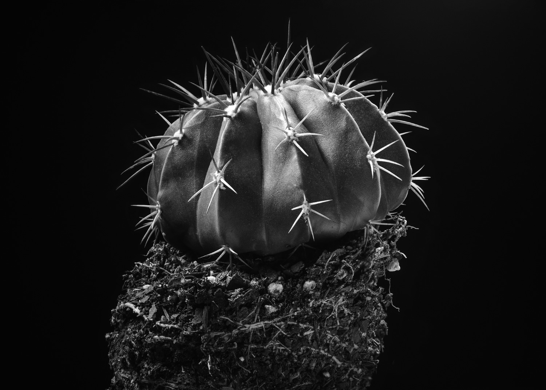cactus-matthew-kashtan-photography.jpg