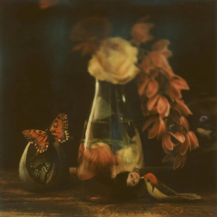 The Flemish Still Life in Me - Stasja Voluti, 2012