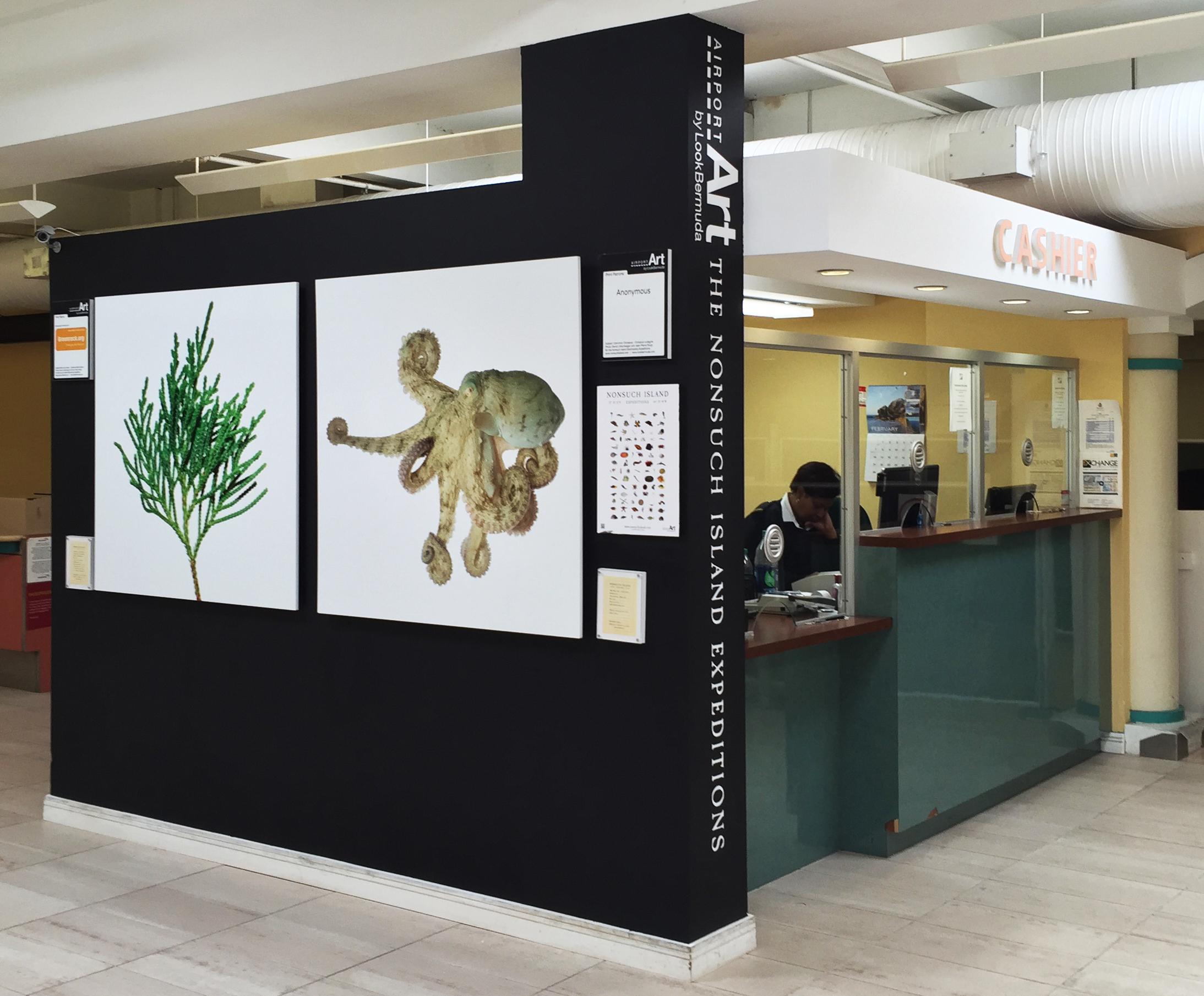 LookBermuda AirportArt Project