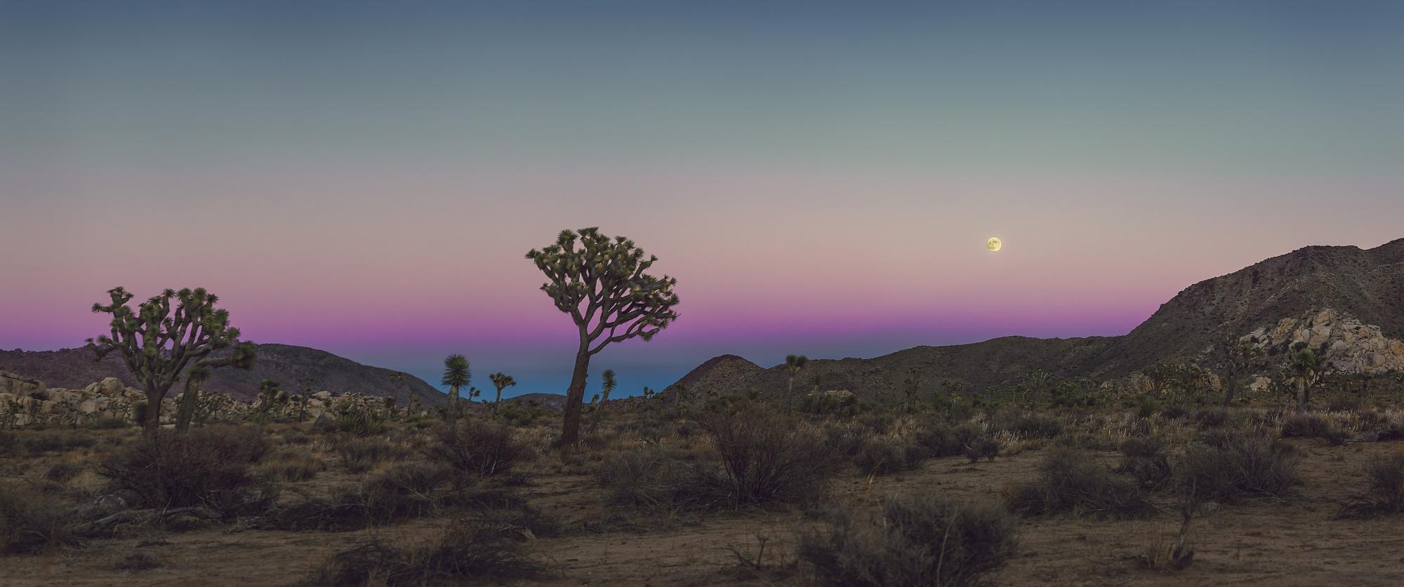 Umbra Moonrise Over Joshua Tree