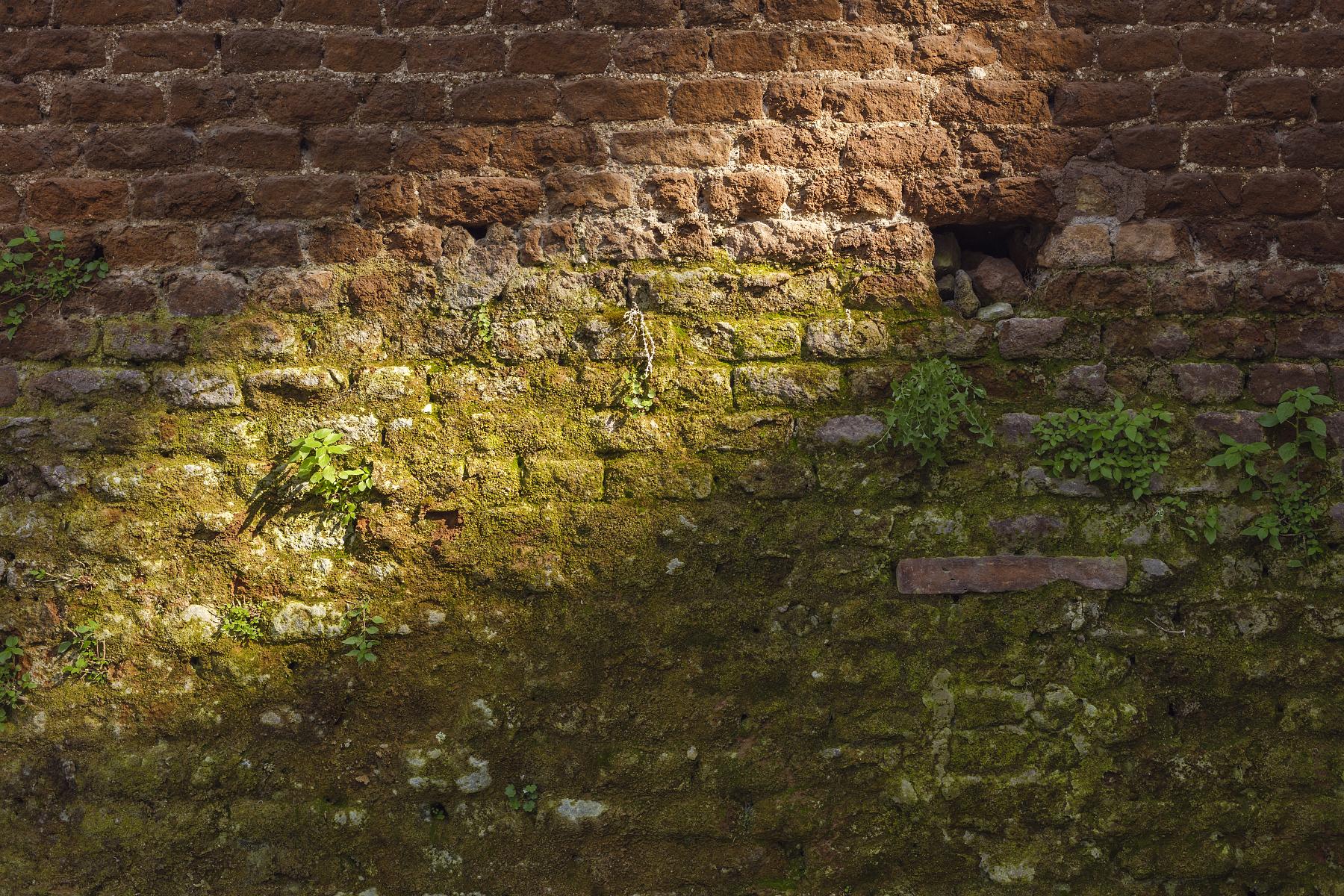 Sunlight against a brick wall at  Giardino degli Aranci  (The Orange Garden).