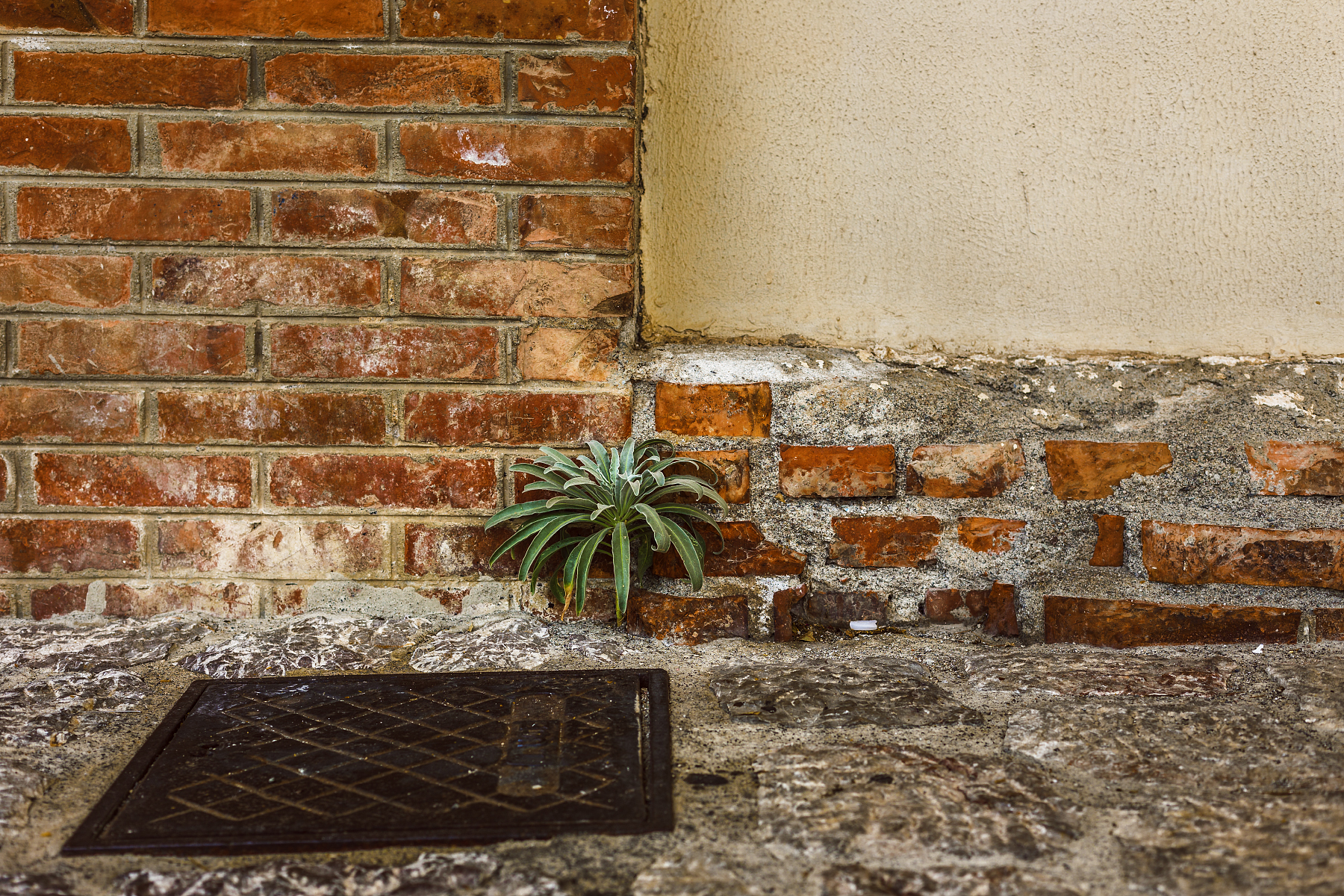 Plant growing out of bricks.