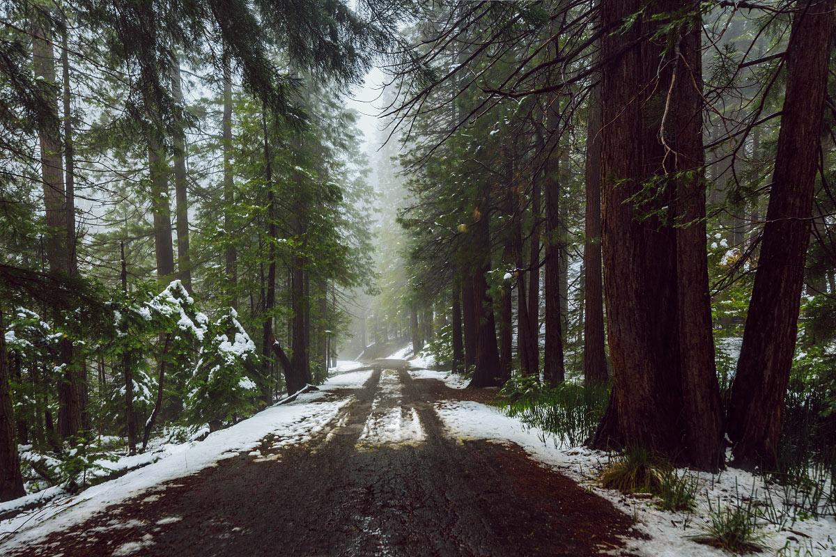 Snowy, foggy road in Yosemite National Park